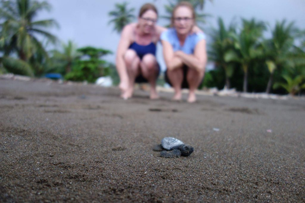Voluntariado tortugas Costa Rica
