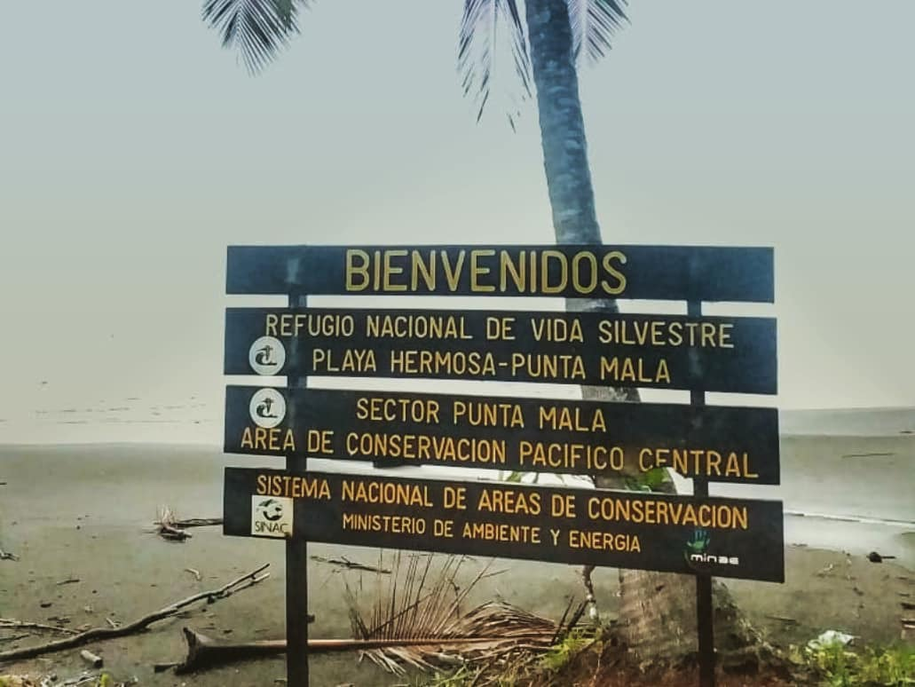 Nuevo Proyecto de Conservación de Tortugas Marinas.