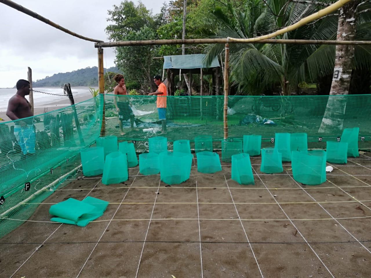 Un año retador para nuestro programa de conservación de tortugas marinas
